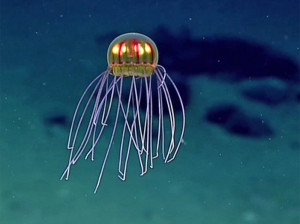 Jellyfish. Image courtesy of the NOAA Office of Ocean Exploration and Research, 2016 Deepwater Exploration of the Marianas